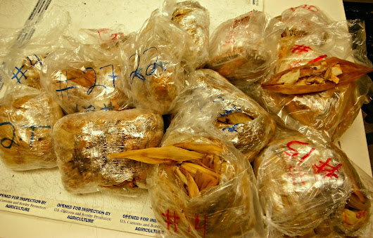 450 illegal pork tamales from Mexico seized at LAX and destroyed