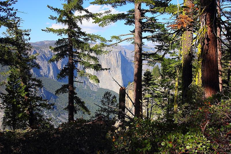IMG_3007 Pohono Trail