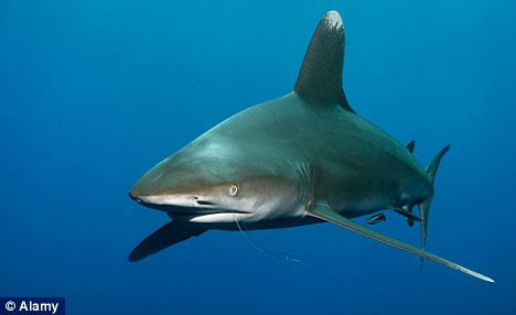 Water interesting discovery: The study may solve the mystery of how sharks with primitive immune systems can so effectively fight viruses that plague all living creatures
