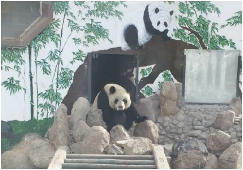"""Harming National Treasures"": Lanzhou Zoo Sparks Controversy (Again) for Apparent Panda Negligence"