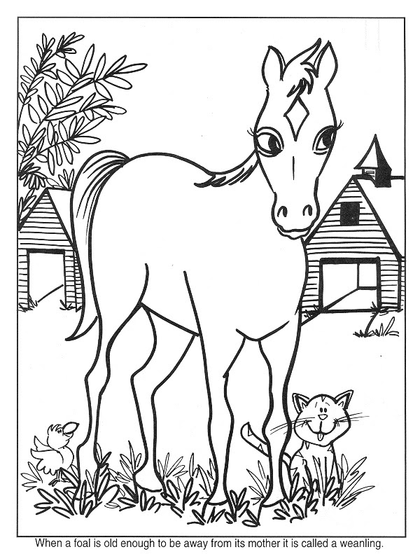Kleuren.nu - paard 18 kleurplaten