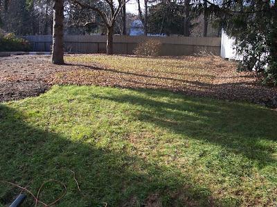 lawn full of leaves