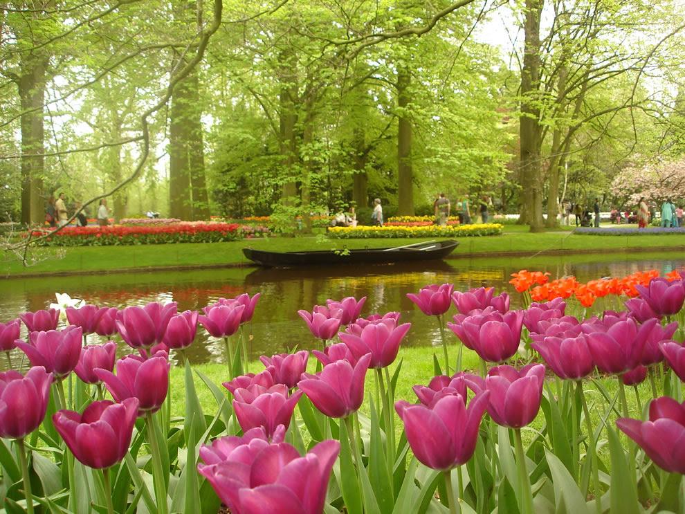 Μια μικρή βάρκα με τα λουλούδια τουλίπα σε πρώτο πλάνο - Keukenhof, Lisse, Ολλανδία