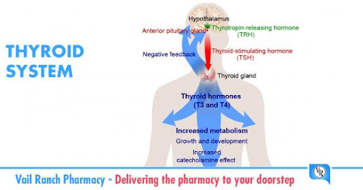 The Thyroid Gland,, A Major Player in Regulating Your Metabolism