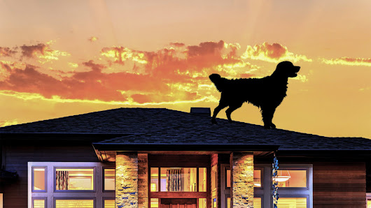 What a Dog on a Roof Can Teach Us All About Roof Safety