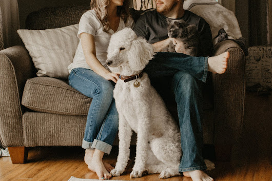 ENSURING YOUR NEW HOME IS PET FRIENDLY - Shannon Holmes