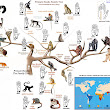 Primatology Palm Reading: The Primate Hands Family Tree!