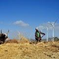 ashegoda wind 3