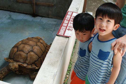 The Live Turtle and Tortoise Museum we go! | All about Cherieladie;