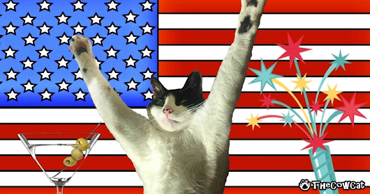 How To Celebrate The 4th of July With Your Cat | The Cow Cat
