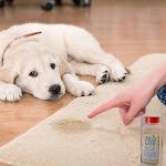 Zeolite Carpet Deodorizing Powder | Allergy-Reducing Relief