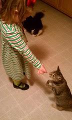Clara Ann hand-feeding treats to Maggie