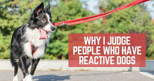Why I judge people who have reactive dogs - ThatMutt.com: A Dog Blog