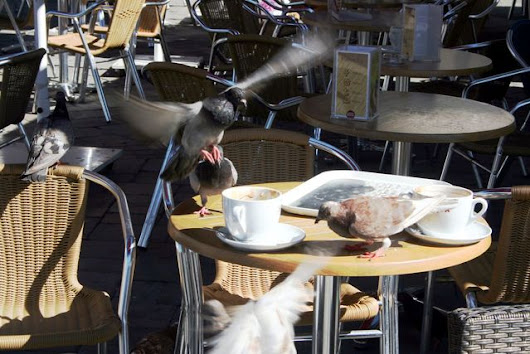 Birds feeding at a table before the waiters cleared | EyeEm