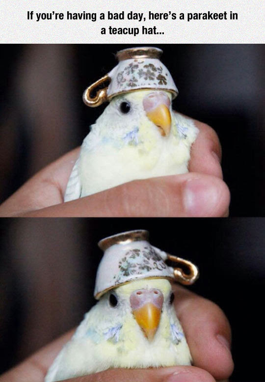 If Youre Having A Bad Day Heres A Parakeet In A Teacup Hat