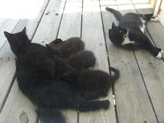 Feeding time at the backyard cat zoo