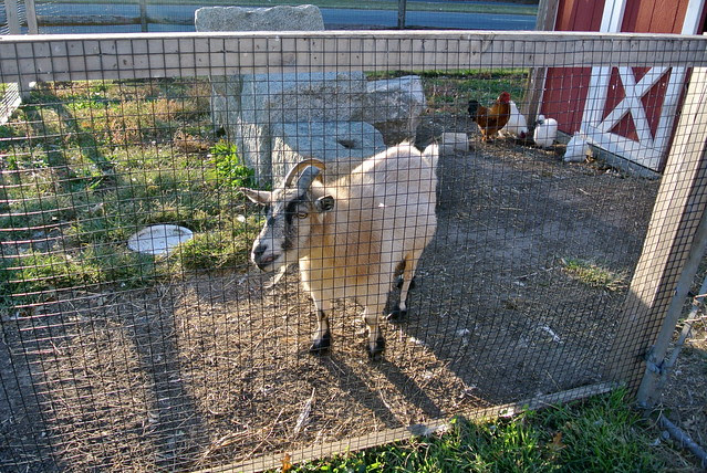 WEARING • A Preseason Trip to the Farm.