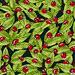 ladybug - IMP/07