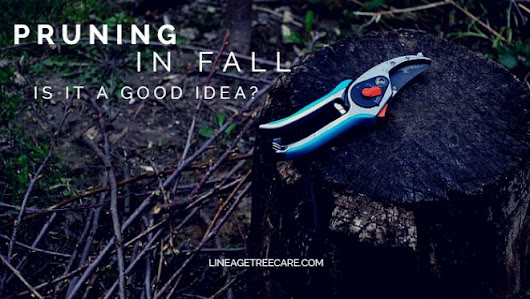Fall Pruning Tips - Should You Prune and How? - Lineage Tree Care