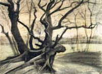 Raíces de árbol