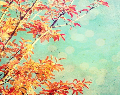 Nature photography - Autumn leaves - Fall photography - tangerine orange wall art - aqua teal decor - colorful tree nursery decor 8x8 print - LupenGrainne