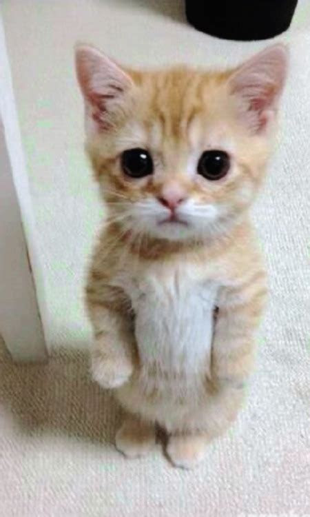 fondos de gatos tumblr