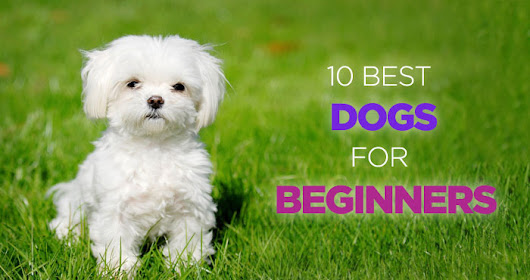 10 Best Dogs for Beginners and First Time Dog Owners