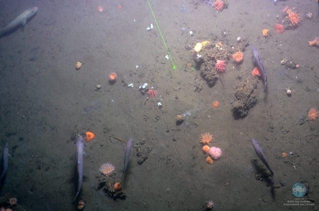 Excepcionales fotos de los escapes de metano bajo el Océano Ártico