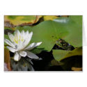 Frog And Water Lily Nature Photography Note Card card