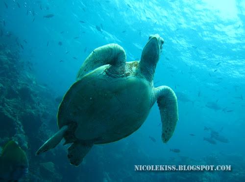 nice shot of turtle