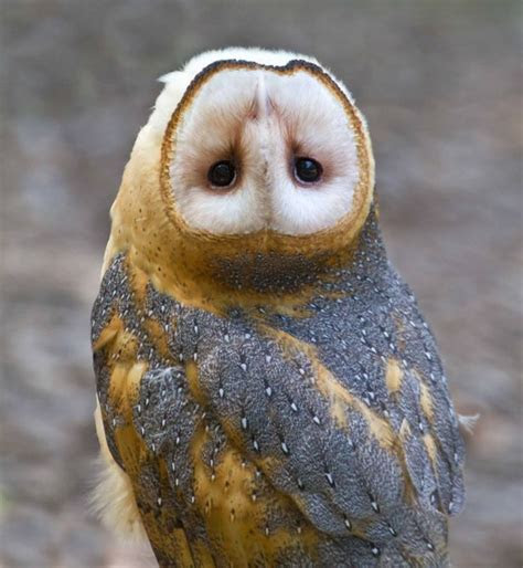 ow£££ Owl with an upside down head