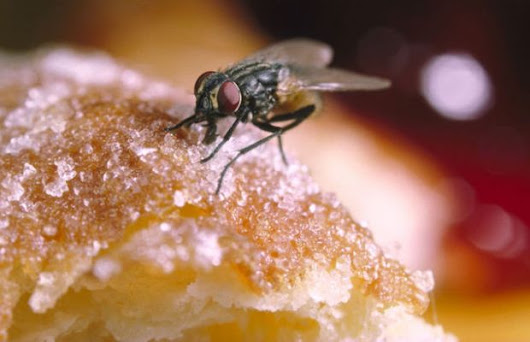 This Is What Happens When a Fly Lands on Your Food - Unshootables