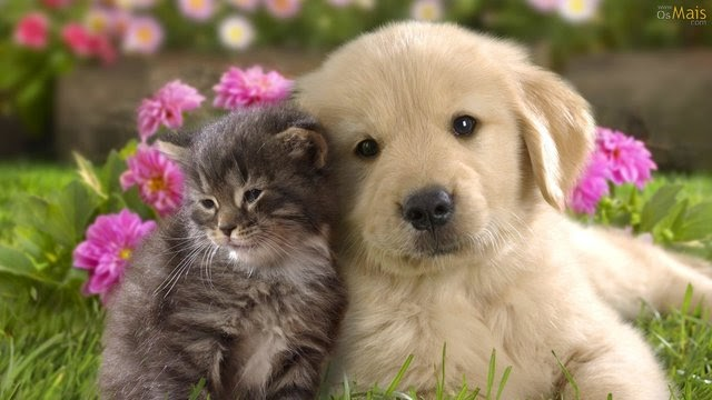 5 Cursos Online para quem cuida de cães e gatos