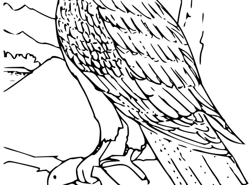 Mewarnai Burung Kakak Tua B Warna