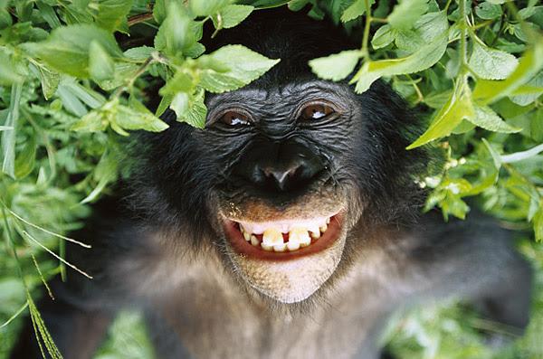 Risultati immagini per scimmia con un fiore
