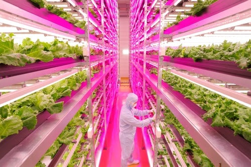 Lettuce See the Future: Japanese Farmer Builds High-Tech Indoor Veggie Factory - GE Reports