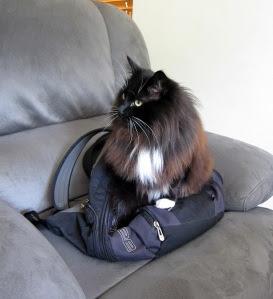 cat-bag-a