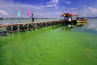 """<p>El lago eutrofitzado Dianchi, en China. El estado del agua la hacía inservible para el consumo y el uso agrícola e industrial / Greenpeace China (<a href=""""https://creativecommons.org/licenses/by/2.0/"""" target=""""_blank"""">CC BY 2.0</a>)</p>"""