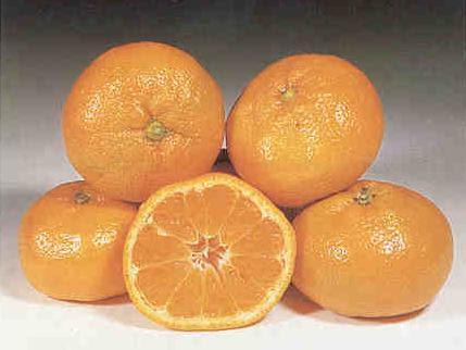 Mandarancio (Citrus reticulata - Citrus clementina)