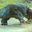 The Best Deal Komodo Tours Package And Flores Island