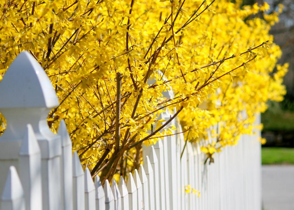 Cheery Spring