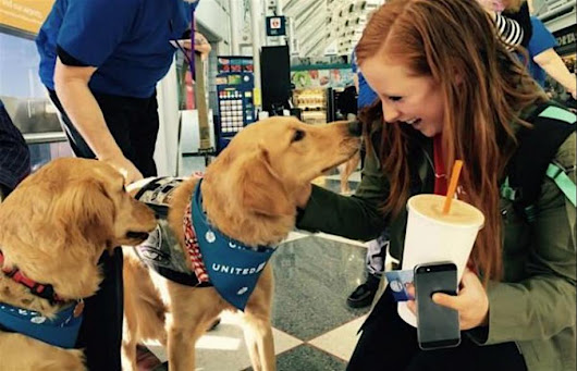 Airports Bring On Therapy Dogs to Ease Holiday Travel Stress - Good News Network