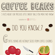 Coffee Beans: 5 Facts about our precious energy balls - I Love Coffee