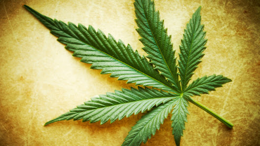 Cannabis: Considerations Before Use | The Cluster Headache Support Group