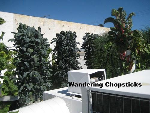 Rooftop Garden - Playa Restaurant - Los Angeles 11