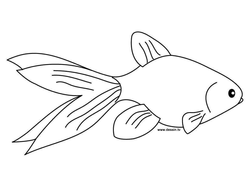 Dessin de poisson gratuit Coloriage poisson rouge