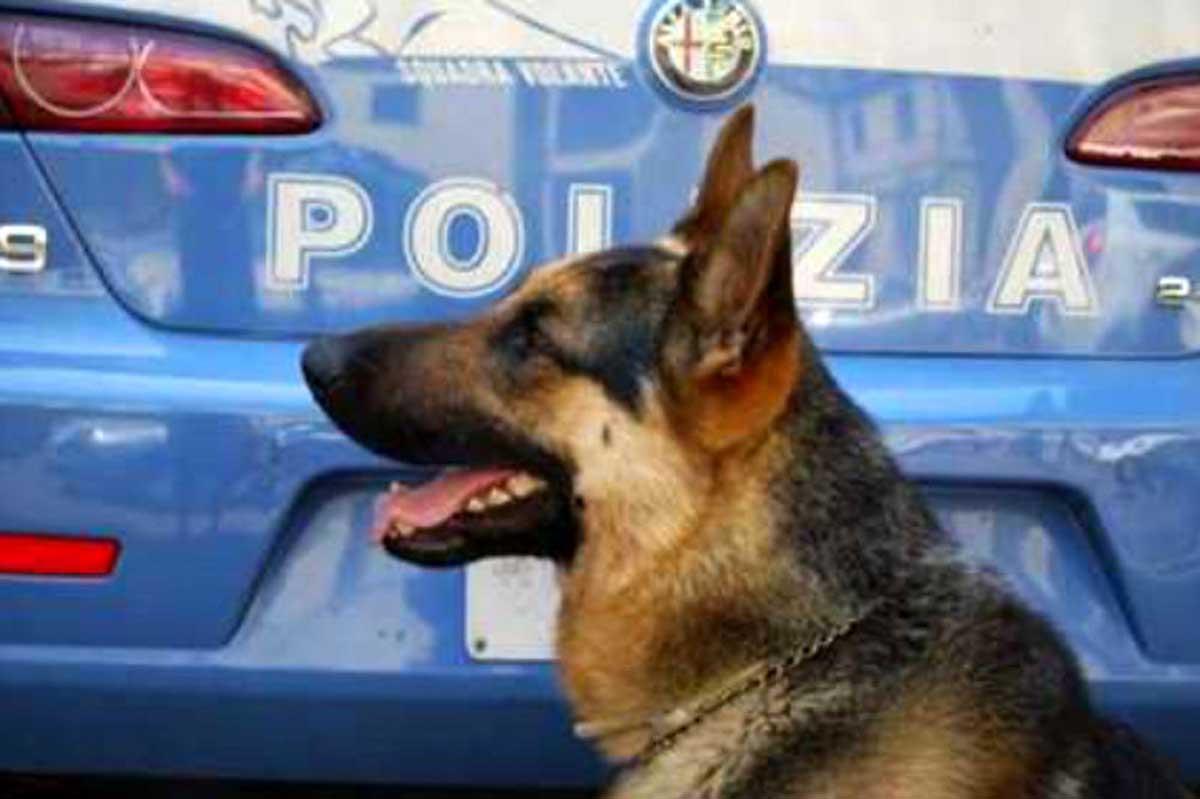 Risultati immagini per cani anti droga