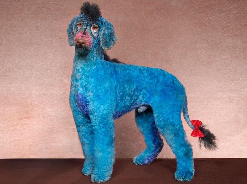Penteados caninos bizarros 28