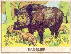 mart sanglier