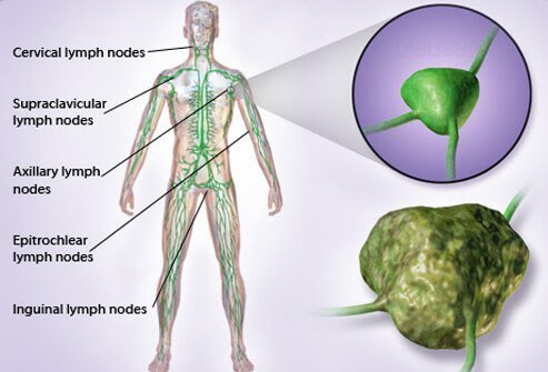 Illustration shows the location of lymph nodes in the body.